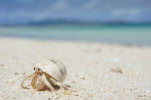 沖縄 久米島のヤドカリと海